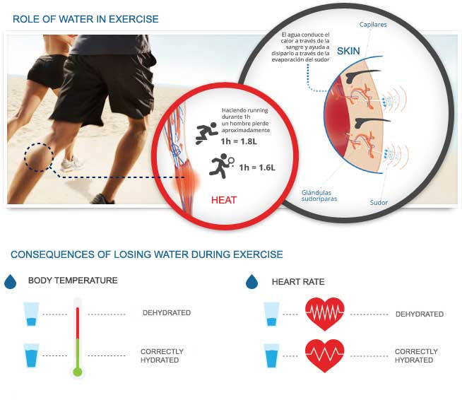 role of watr in exercise